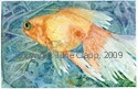 Goldfish, Blue Water